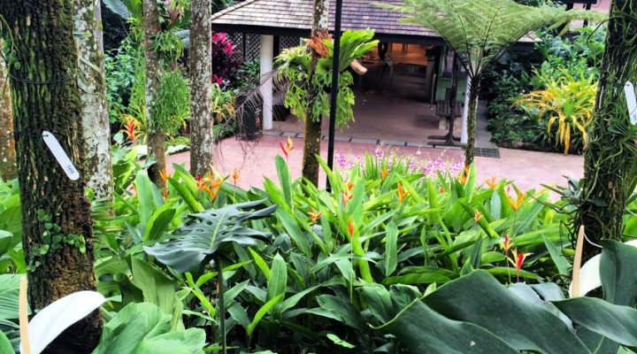 Asia: Singapore (Parcul Orhideelor)
