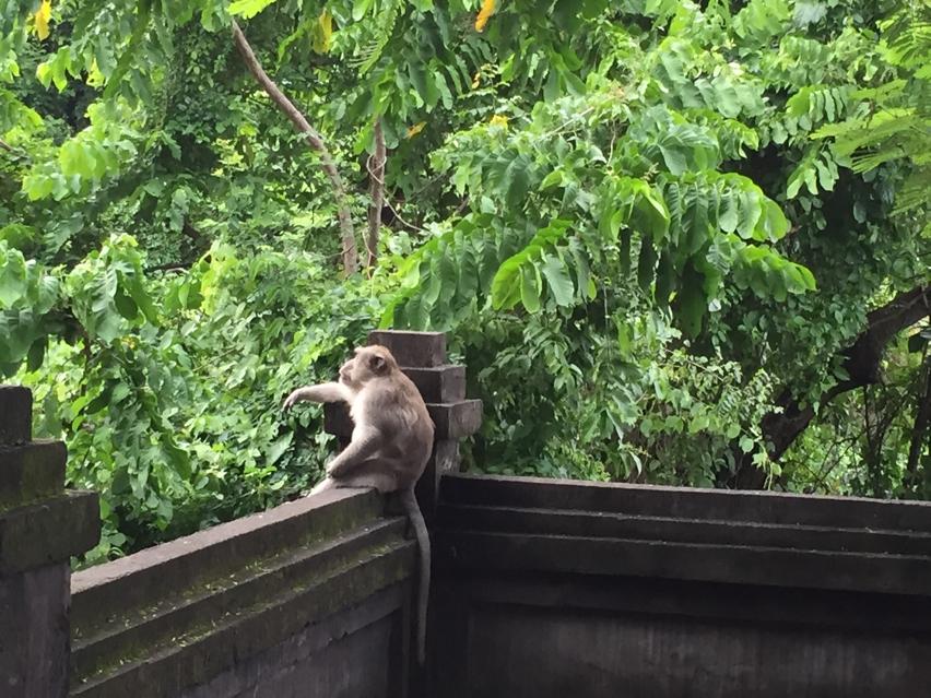 Laura Cosoi  Bali-080