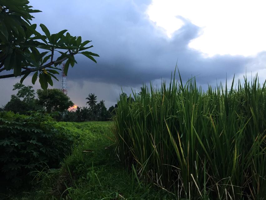 Laura Cosoi  Bali-46