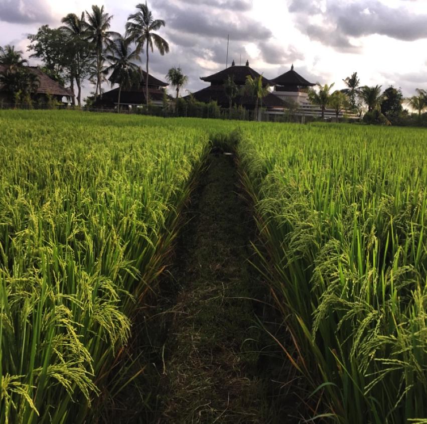Laura Cosoi  Bali-51