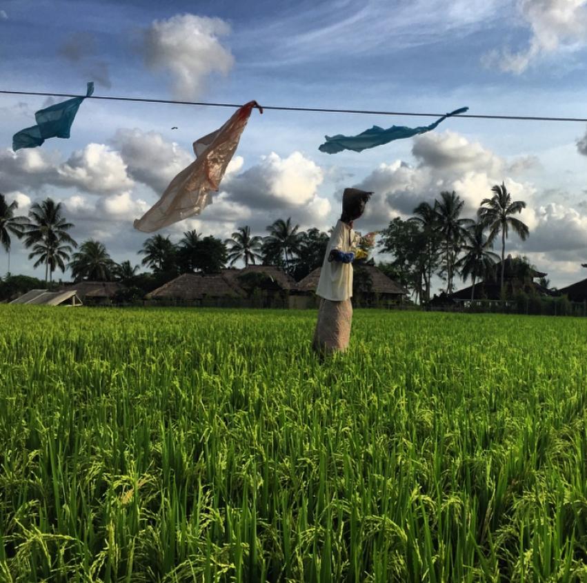 Laura Cosoi  Bali-52