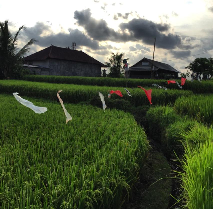 Laura Cosoi  Bali-53