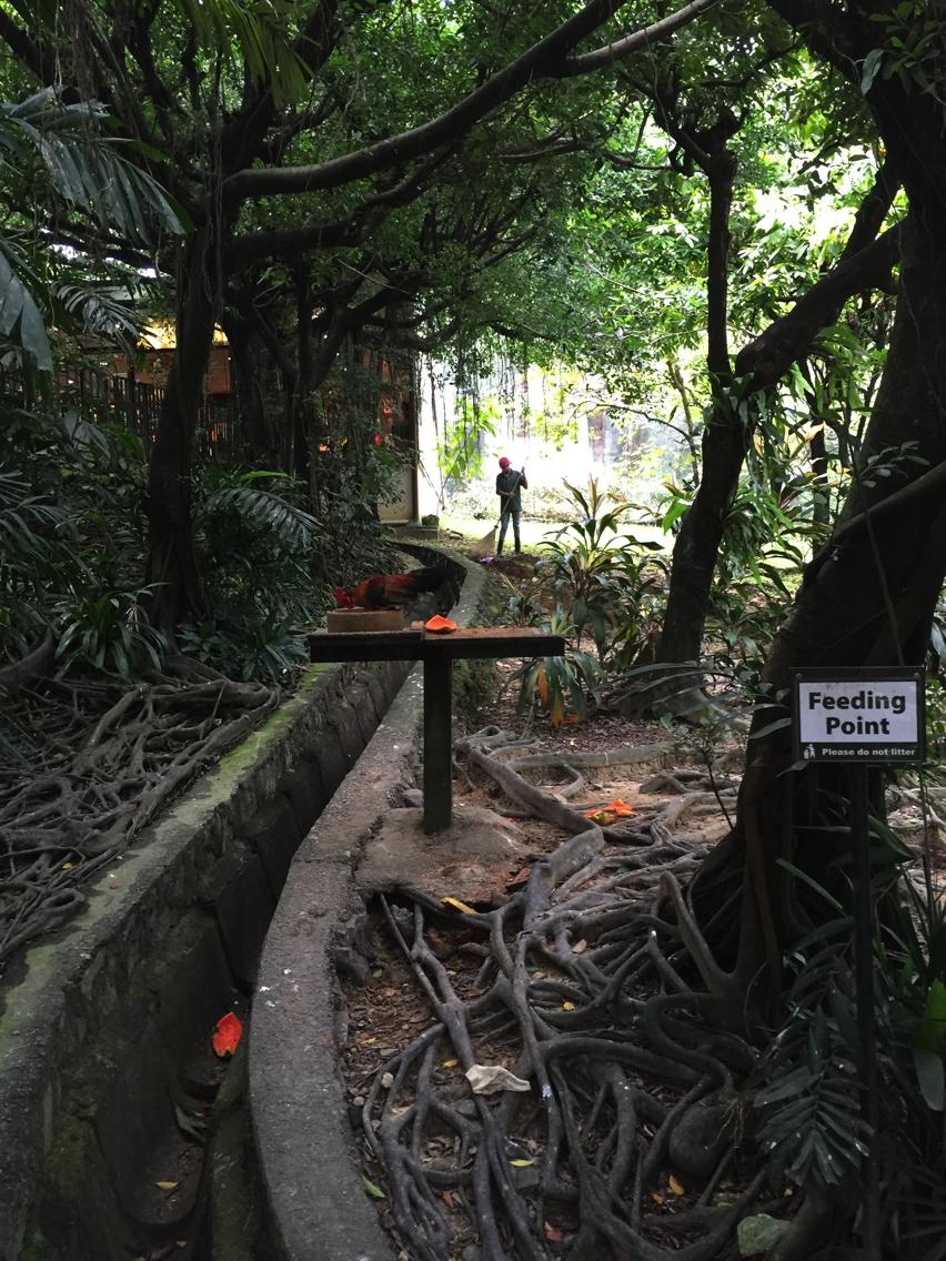 Laura Cosoi  Kuala Lumpur-29