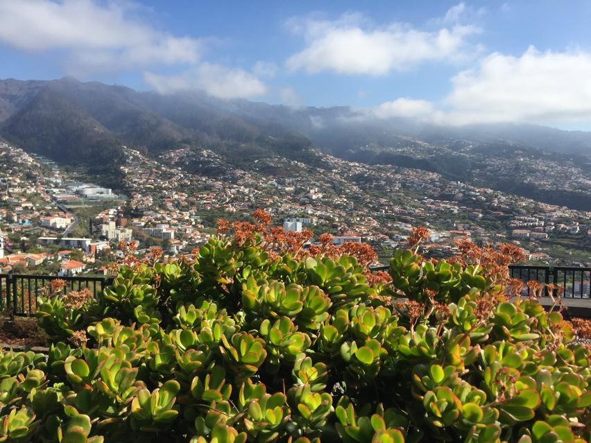 Laura Cosoi Madeira-07