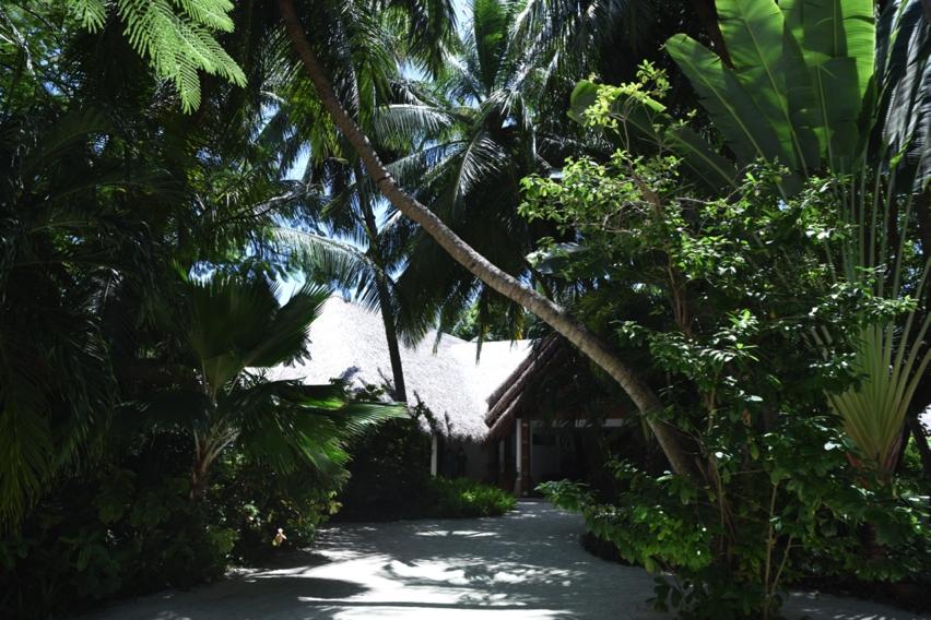 Laura Cosoi Maldive-32