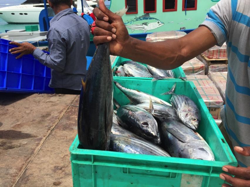 Laura Cosoi Maldive-61